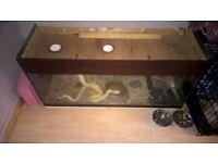 albino python and tank kit
