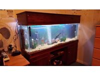 4ft aquarium with oak stand unmarked