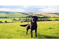 Dog Walking and Pet Sitting in Canterbury, Whitstable and surrounding areas