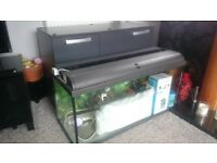 Fish tank - 4 ft - with cabinet - SOLD - SOLD - SOLD