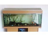 Juwel Rio 240 Litres Aquarium Fish Tank - Including Lid, Light & Cabinet Stand