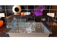 Hamster cage an accessories
