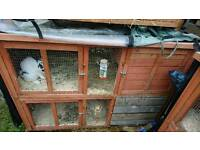 Hutch for sale with rabbits.