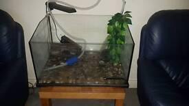 Turtle set up