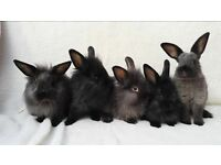 cute baby rabbits ready now