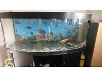 Juwel 450 litre Aquarium