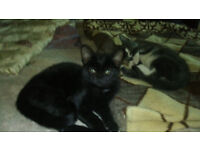 2 Kittens looking for a new caring home.