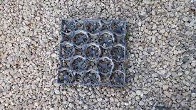 Gravel stabilisation grids ideal for gravel drives