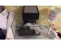 Fluval edge fish tank