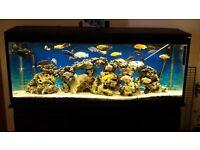 4ft cichlid aquarium/setup