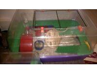 syrian dwarf hamster