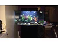Aqua one 130 litre fish tank