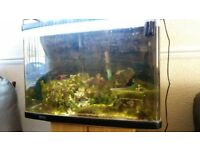 Marine Fish Tank 60cm x 40cm x 40cm with rock,fish,frags.