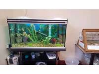 Complete Fish Tank and Fish