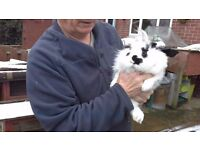 Issaac is looking for his new home 4 months old he likes a cuddle and a gentle brush
