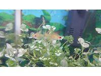 fish tank 30L