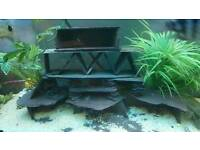 Fish Tank Slate Caves For Sale