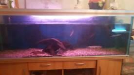 6 foot fish tank with fish
