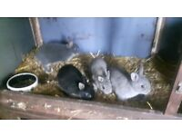 Babby rabbits