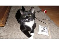 Missing 1yr old Female Black Cat with White Paws & Whiskers