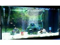 Juwel 125 fish tank full set up