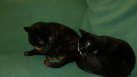 LOVELY AFFECTIONATE FEMALE CAT*13 YEARS OLD*SPAYED* IN NEED OF A HOME ASAP*