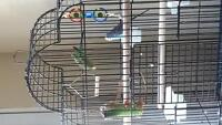 2 buggies for sale plus cage