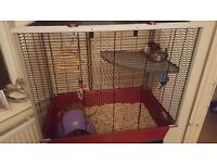 Two male rats and cage