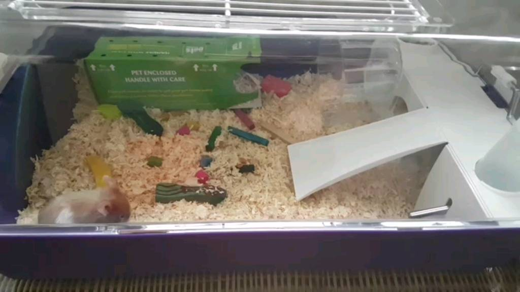 1 White And Ginger Syrian Hamster Cage And Accessories
