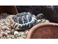Tortoises & Vivarium