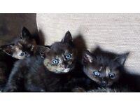 1 x kitten left