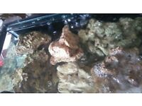 Live rock for marine fish tank