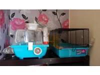 2 x russian dwarf hamsters