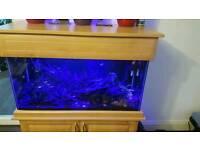 Complete Tropical Aquarium Fish Tank