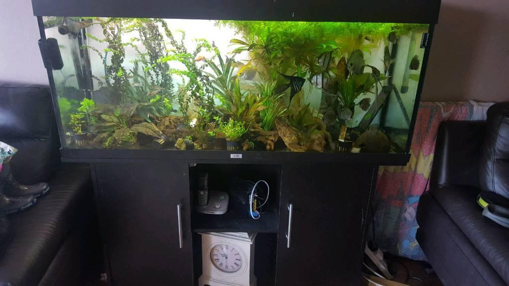 Rio 240 fish tank for sale