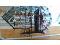 2 Budgies and large suspended cage