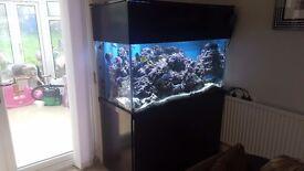 Marine aquarium 4x2x2 everything included