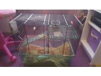 Gerbils needing new homes