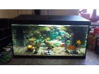 Fish tank .54 litres .filter.heater .8fishes
