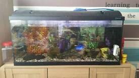 Full set up large fishtank