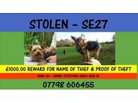 Stolen Miniature Yorkshire Terrier - £1000 Reward offered for information