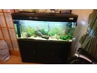 Fish tank 220l