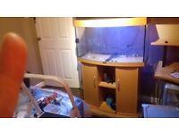 Aquarium fish tank JUWEL VISION 180 BOW FRONTED