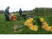 Farm Staff needed for Organic Fresh Produce business near Canterbury.