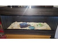 2x horse field tortoises and tank set up
