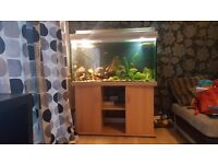 4 ft Aquarium
