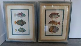Beautiful pictures of exotic fish in hand painted frames and mounts
