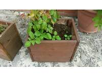 plant boxes with flowers