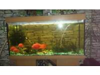 4 ft fish tank need gone REDUCE IN PRICE