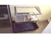 Rabbit. Guinea pigs cages